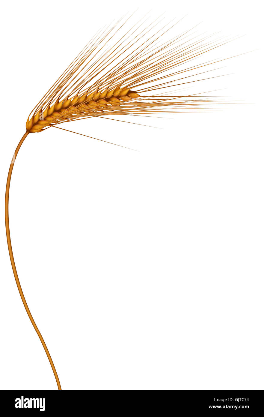 summer summerly wheat - Stock Image