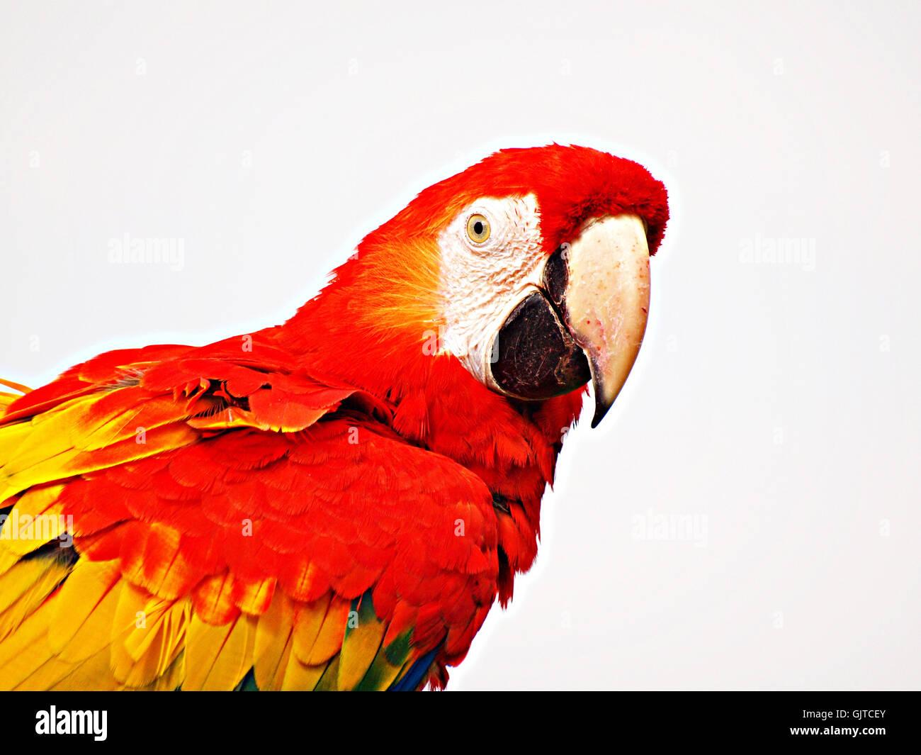 pet bird birds Stock Photo