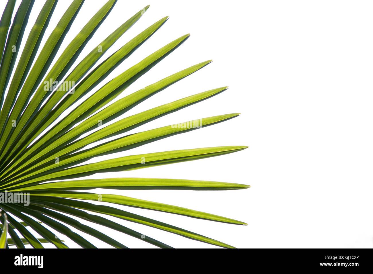 detail optional green - Stock Image