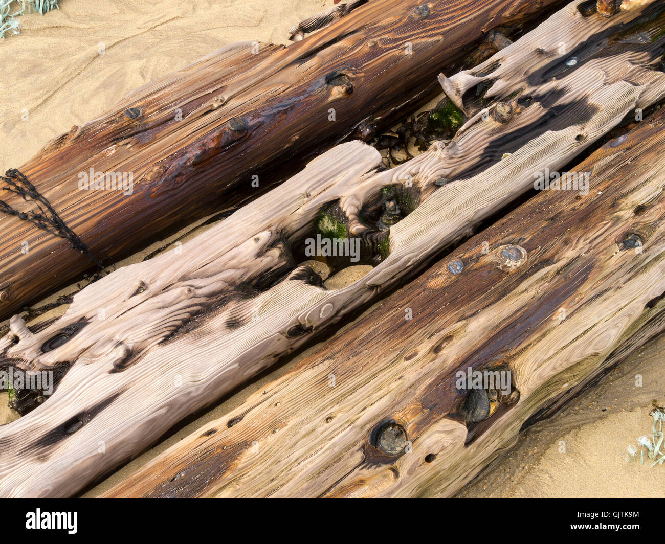 Old oak shipwreck timbers buried in beach sand, Balnahard Beach, Isle of Colonsay, Scotland, UK. - Stock Image