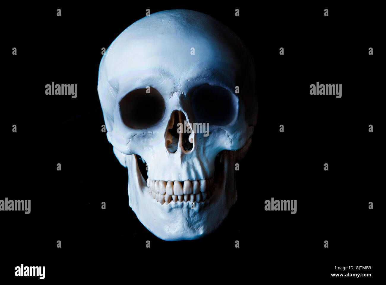 human skull - Stock Image