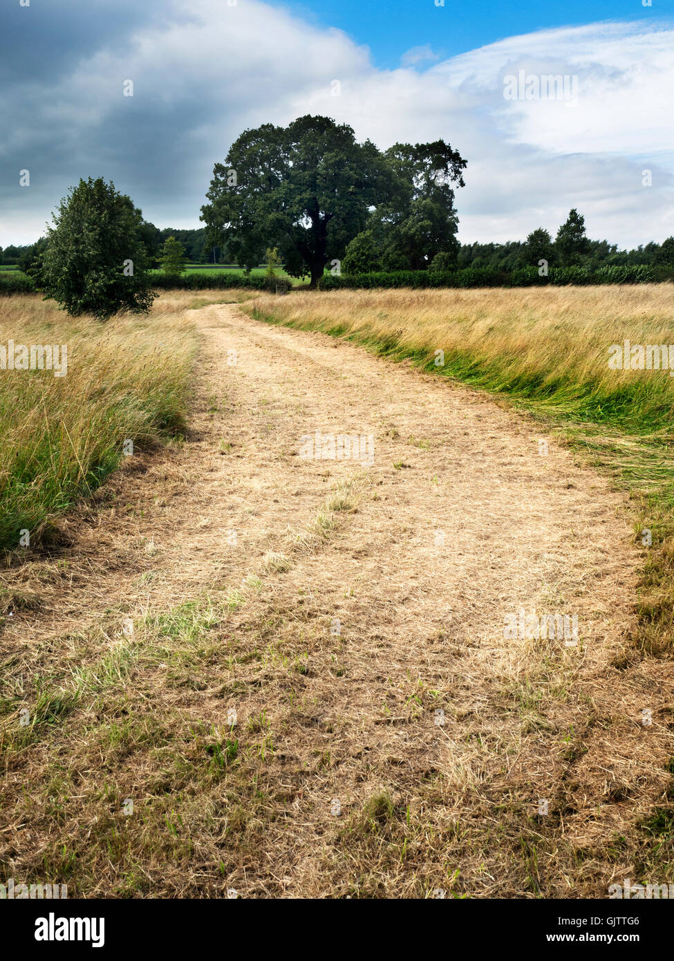 Track through a Meadow of Long Grass at Studley Roger near Ripon North Yorkshire England - Stock Image
