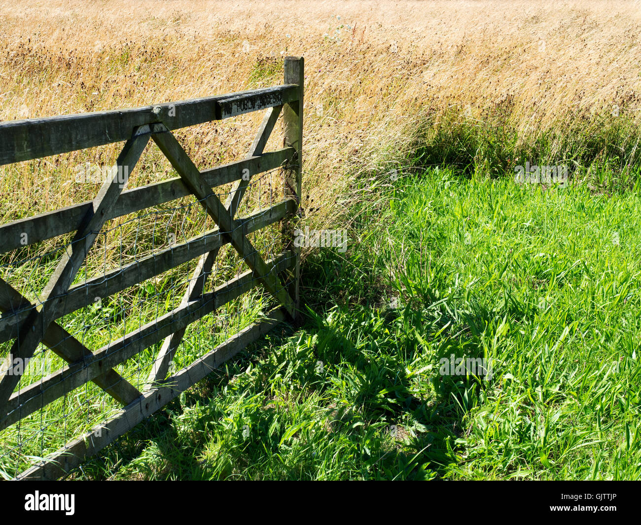 Gate into a Meadow of Long Grass near Studley Roger Ripon North Yorkshire England - Stock Image
