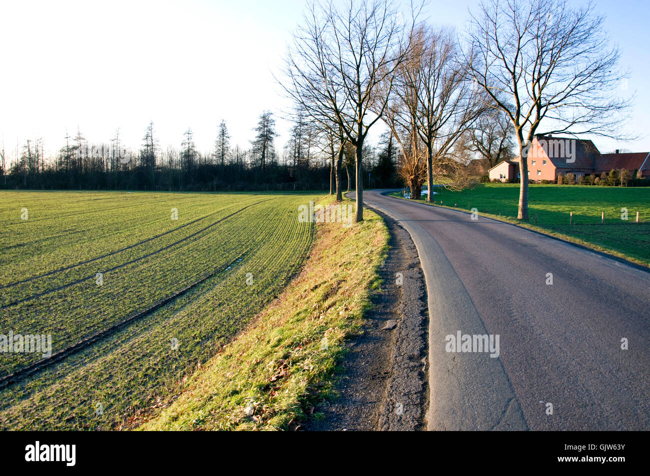 tree trees land - Stock Image