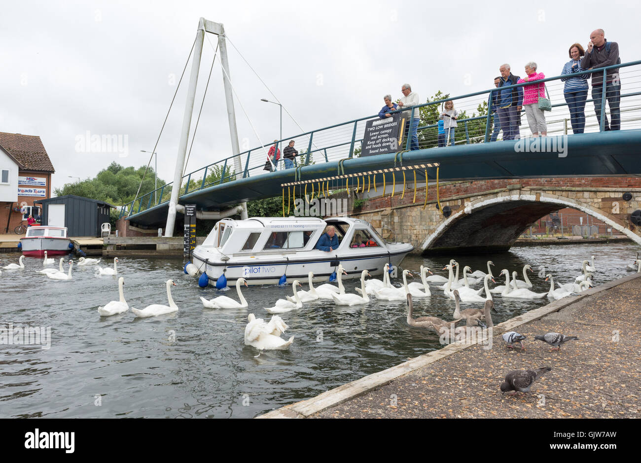 A pleasure boat passes under onlookers stood on a road bridge while a flock of swans gather at the riverside, Wroxham, - Stock Image