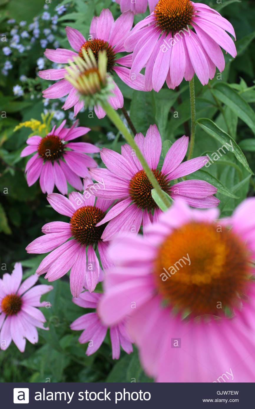 flower plant sun shade - Stock Image