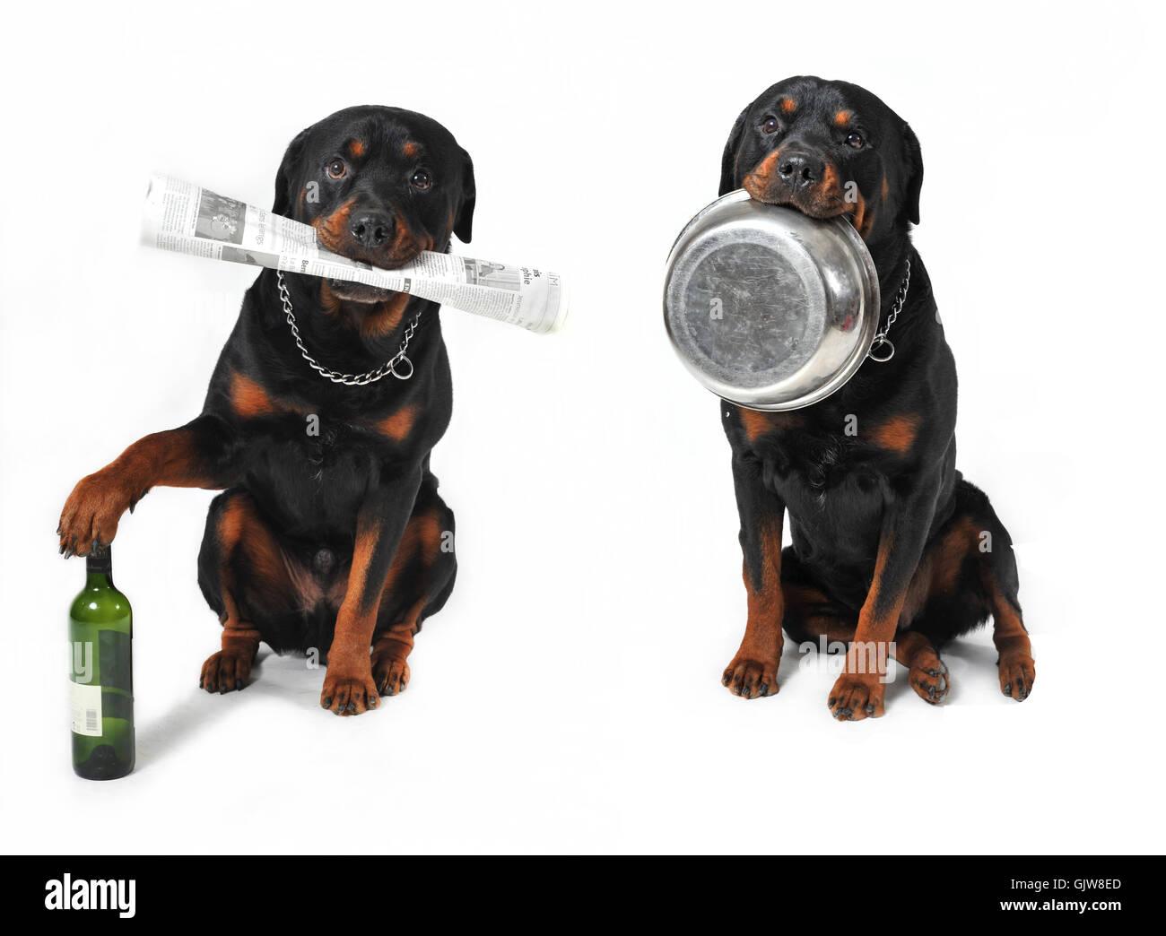 pet dog dogs - Stock Image