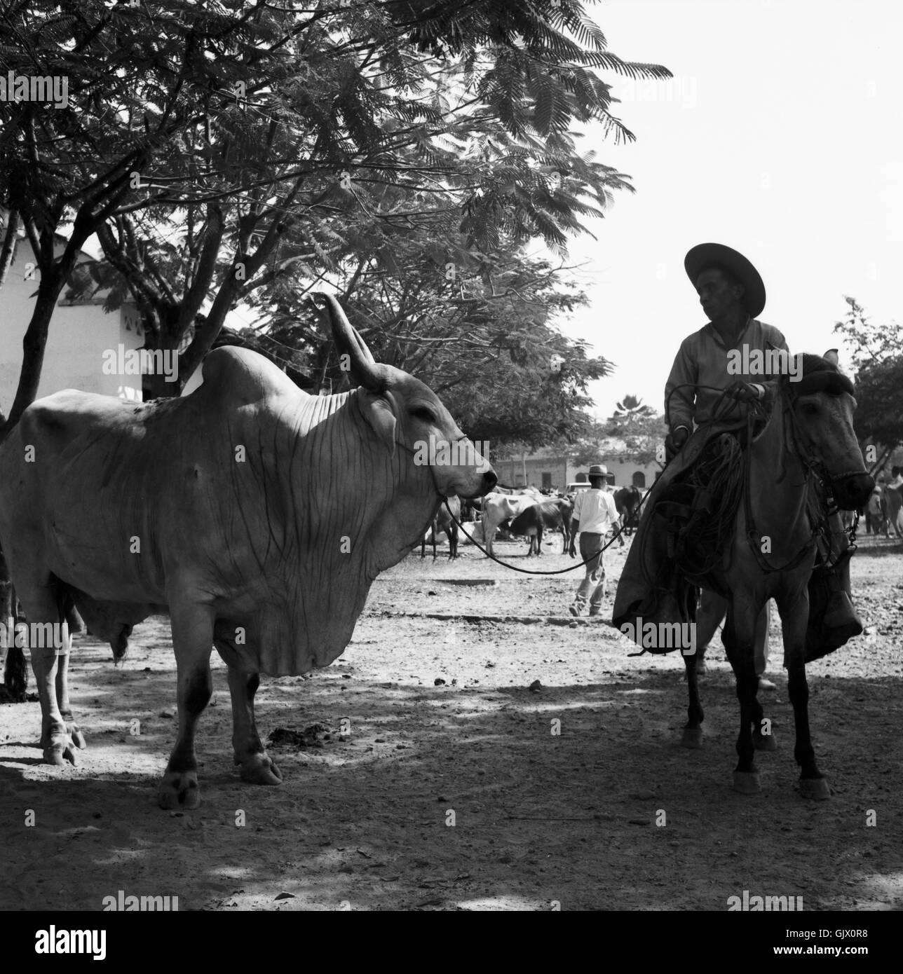 Auf dem Viehmarkt, Kolumbien 1960er Jahre. On the cattle market, Colombia 1960s. Stock Photo