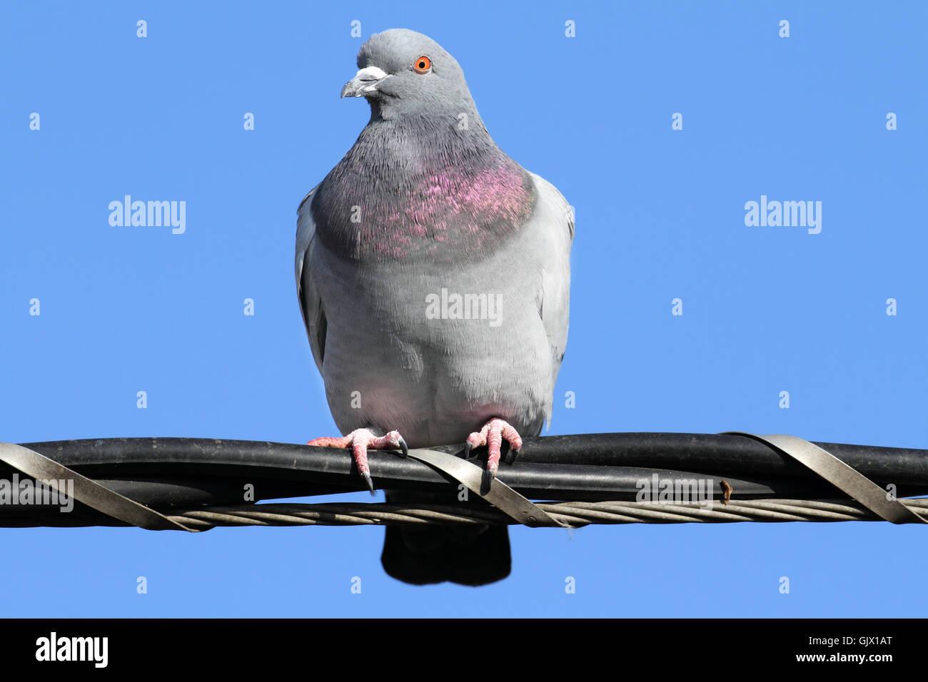 bird wild wildlife - Stock Image
