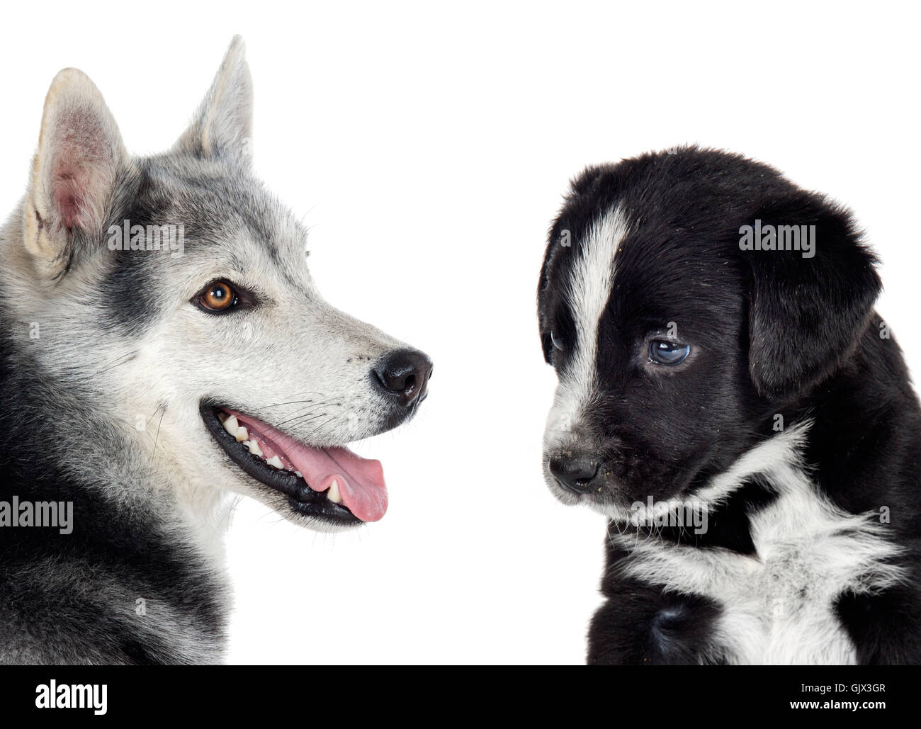 dogs different races - Stock Image
