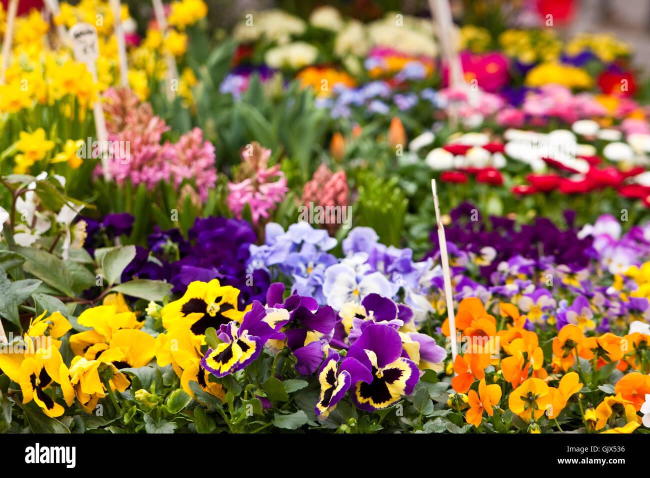 flower plant bloom - Stock Image