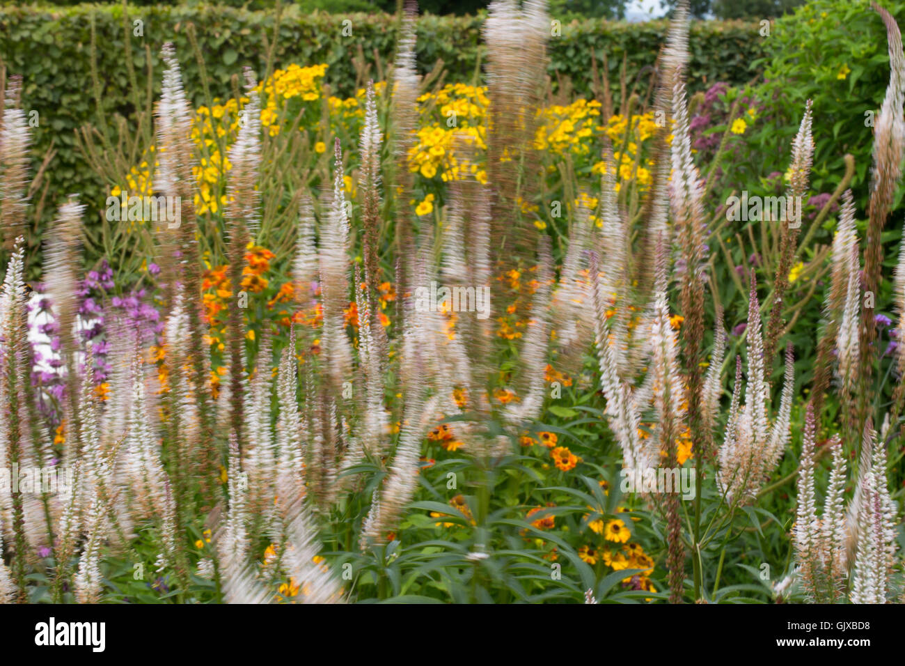 Colours of Ness Gardens in Cheshire - Stock Image