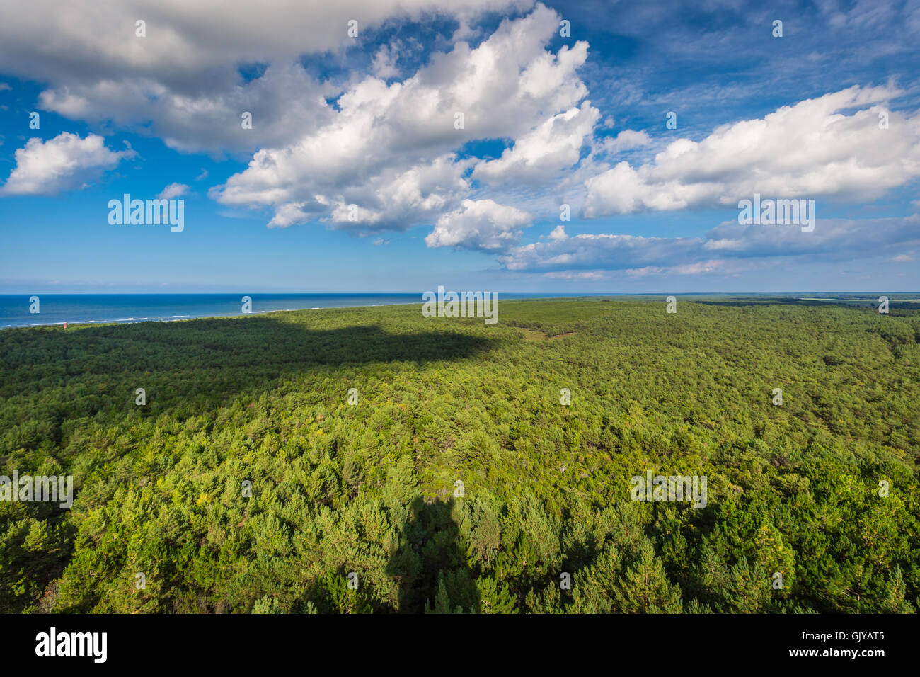 Top view of coniferous forest on the Baltic Sea coast, Poland - Stock Image