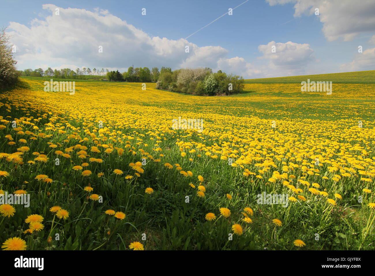 flower flowers plant Stock Photo