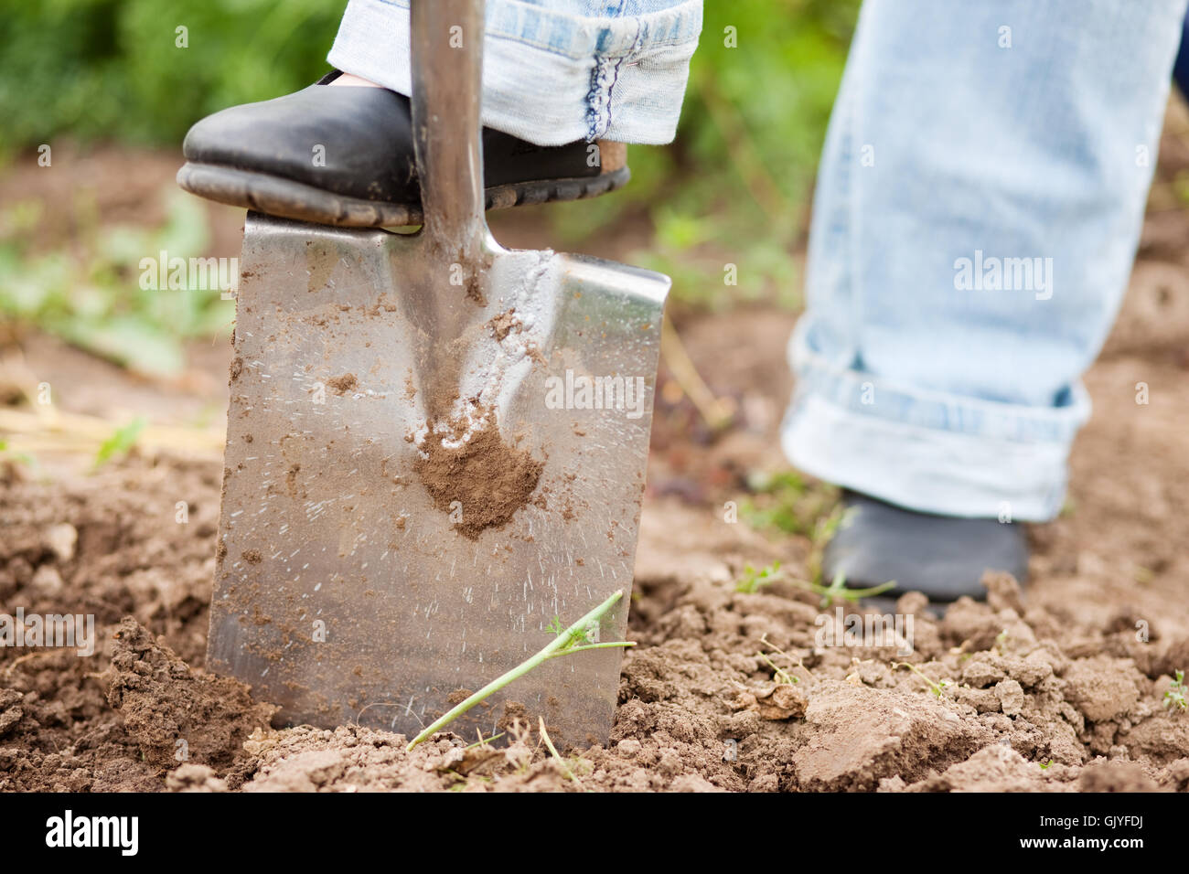 in the garden to dig the ground - Stock Image