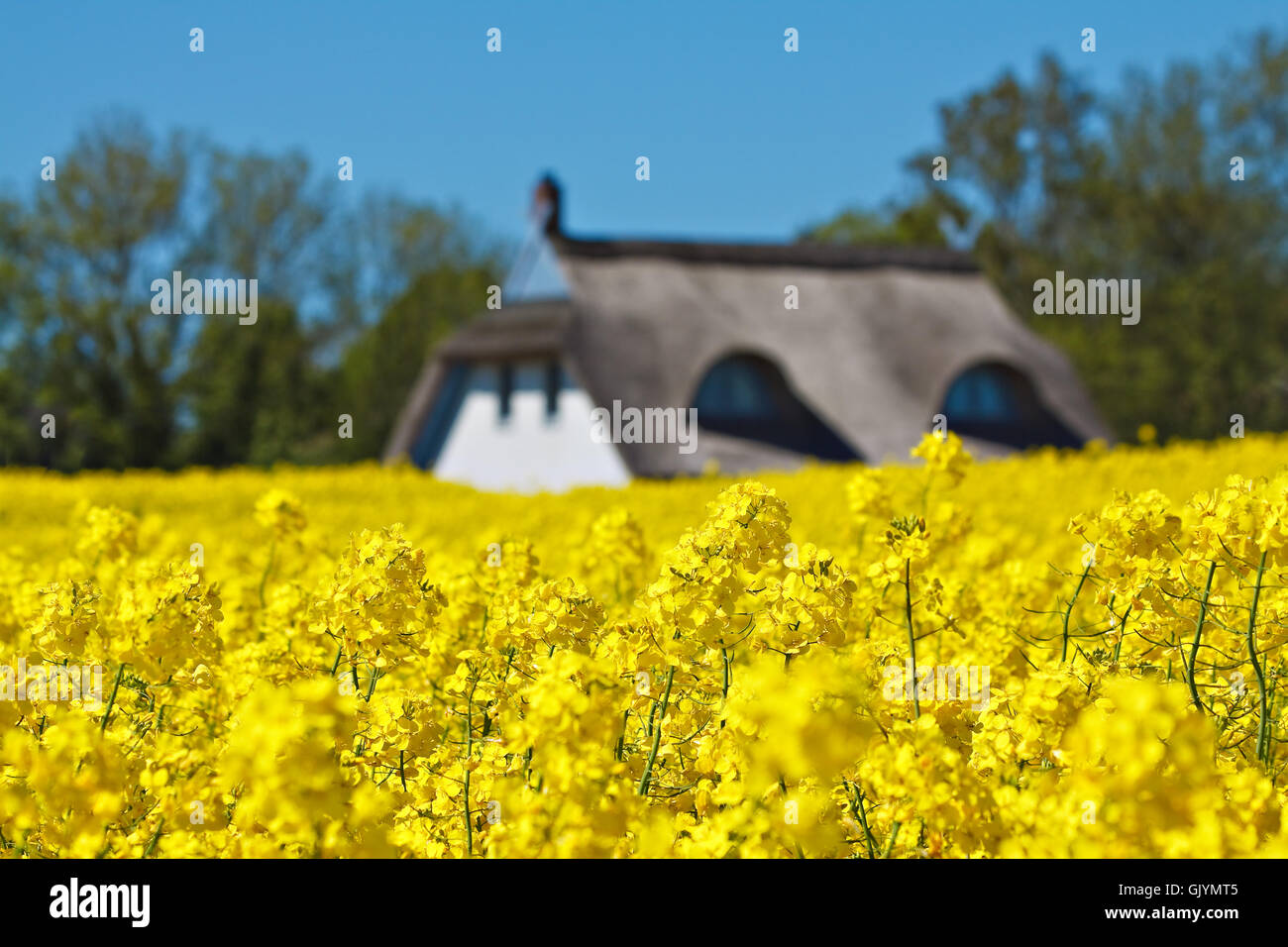 house on the sidelines - Stock Image