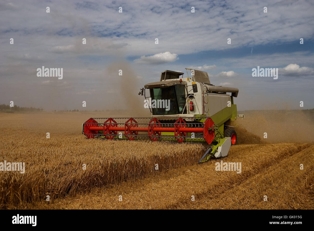 agriculture summer summerly - Stock Image