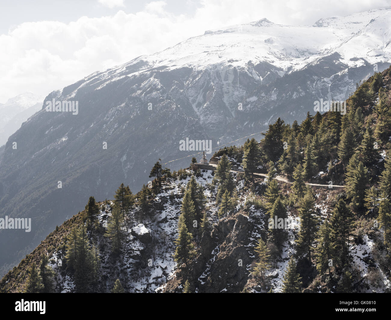 Evergreens in the Himalayas near Namche, Nepal - Stock Image