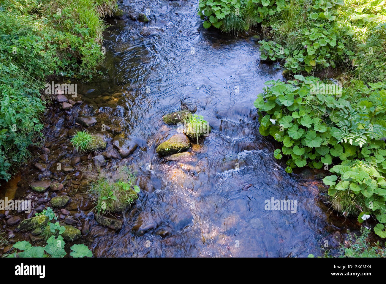 mountain stream in the black forest,baiersbronn - Stock Image