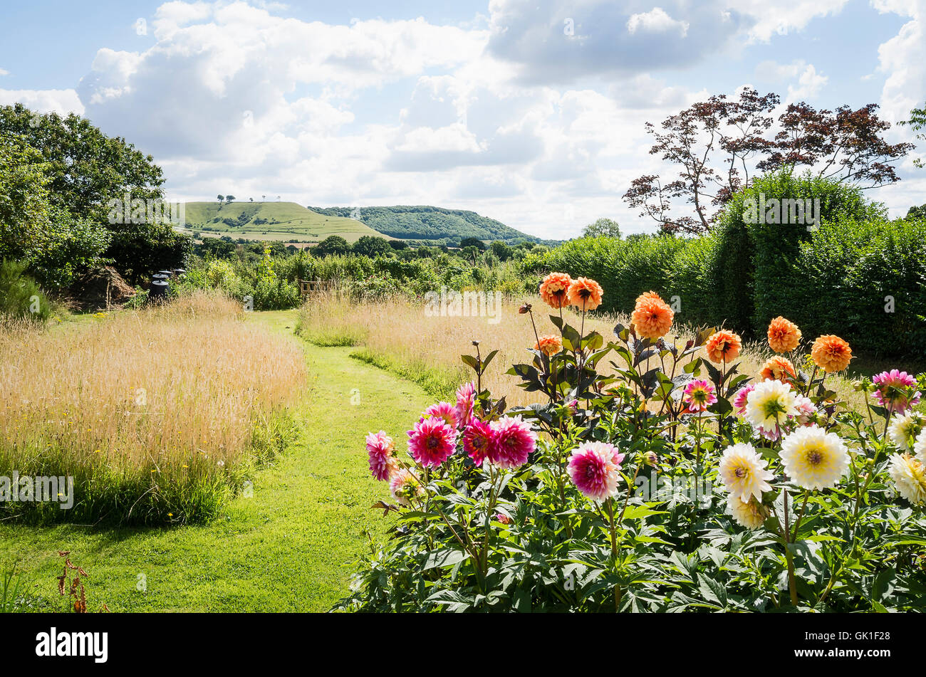 An country garden wwith dahlias and grass paths through flowering wild grasses - Stock Image