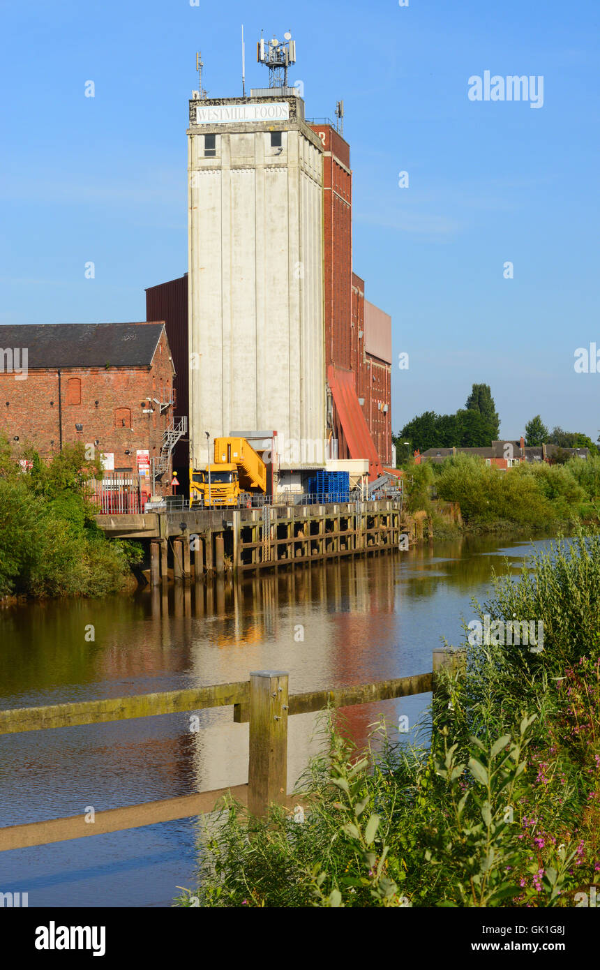 lorry emptying grain into flour mill by the river ouse selby yorkshire united kingdom - Stock Image