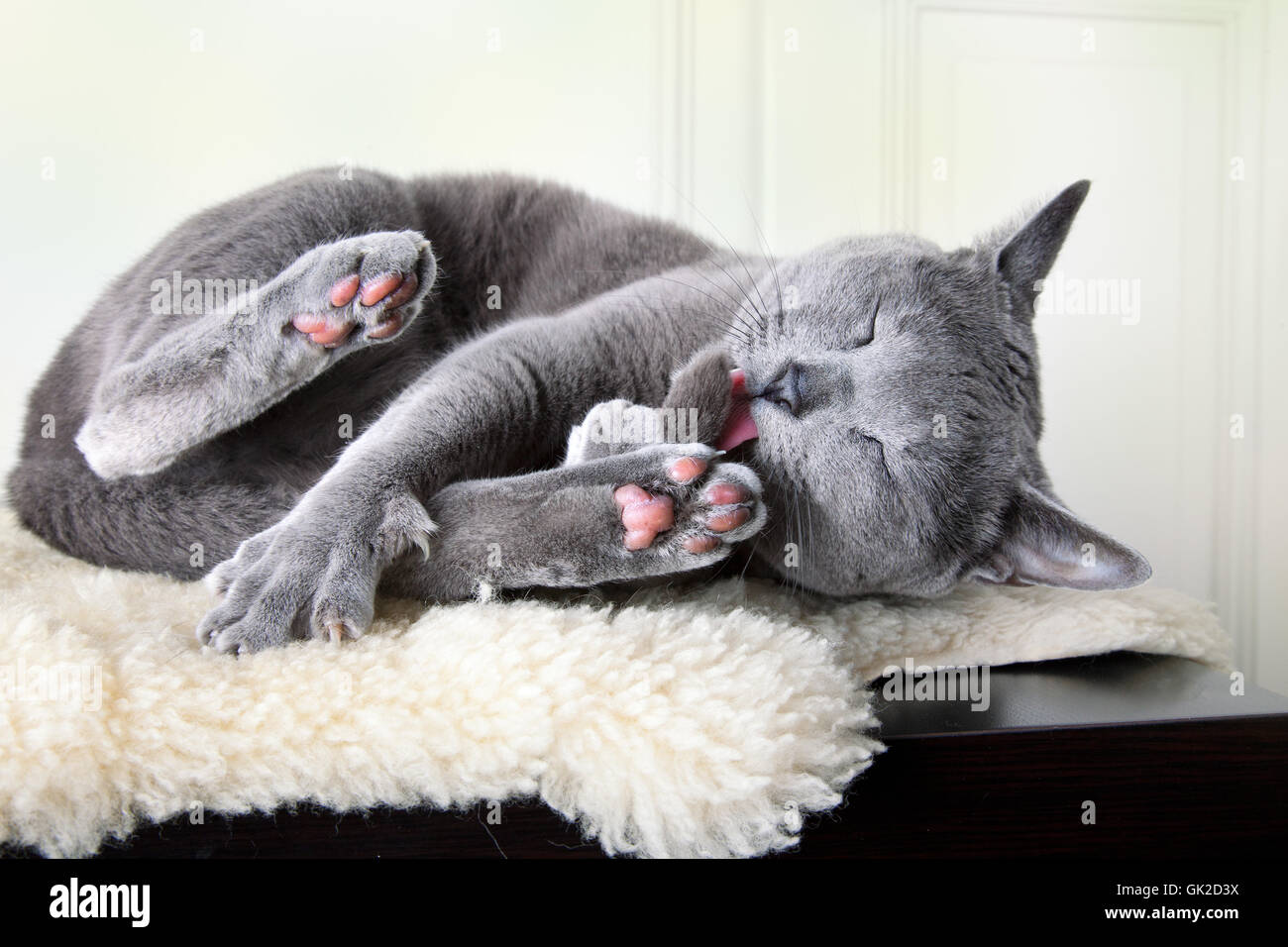 cat's lick - Stock Image