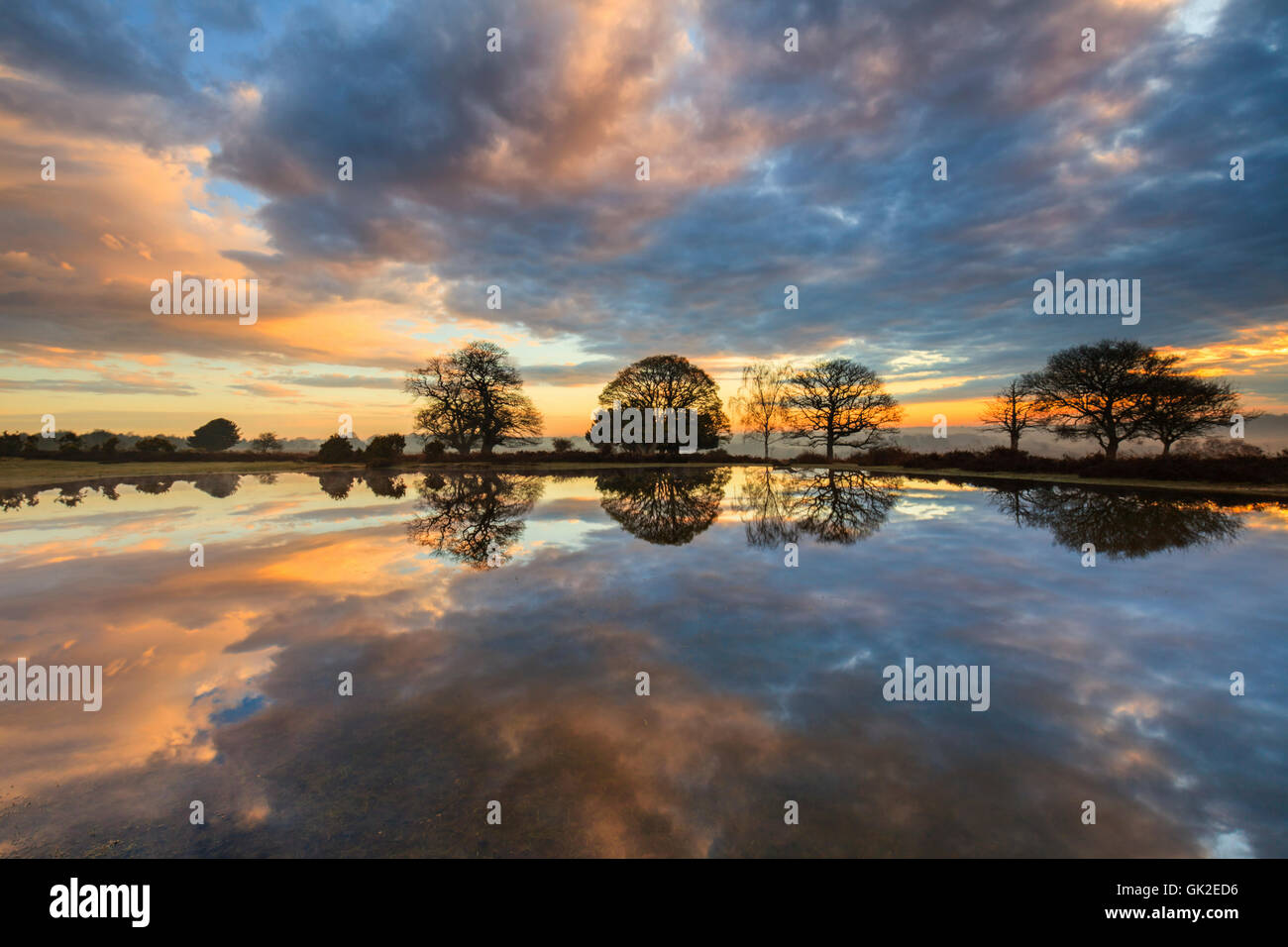 Mogshade Hill pond in the New Forest National Park. - Stock Image