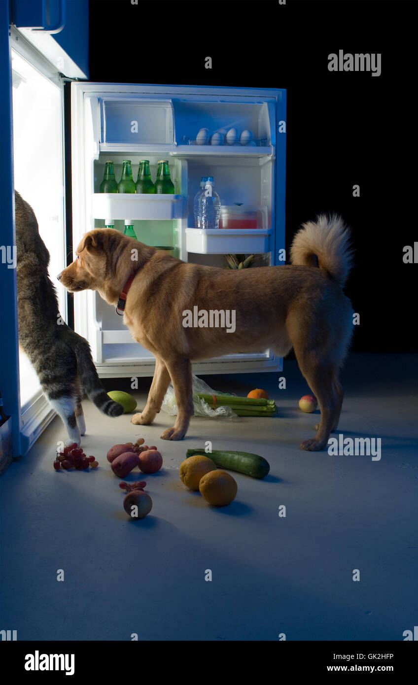 Dog Cat Watching Table Food