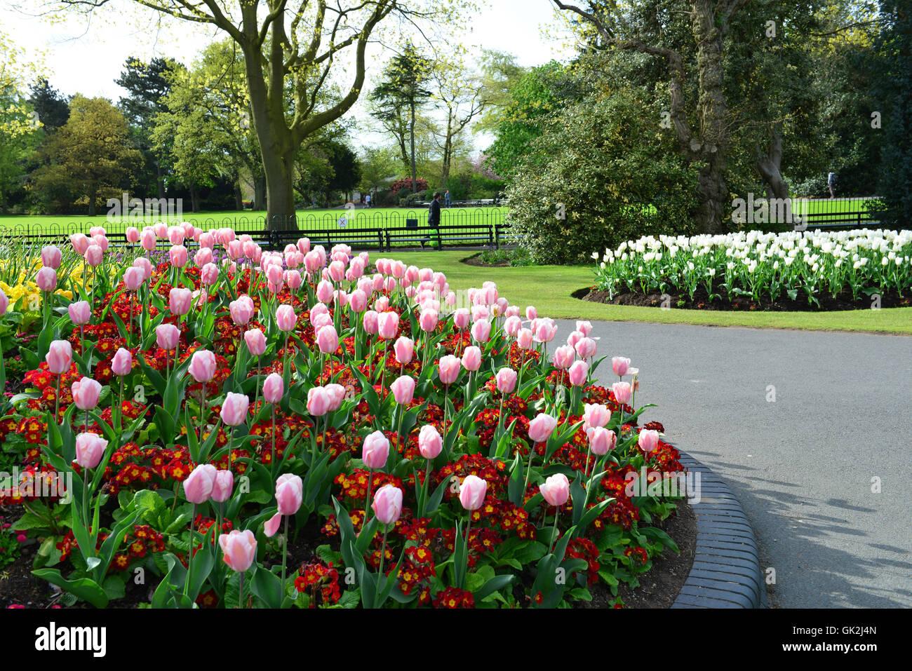 Flowers in Belfast - Stock Image
