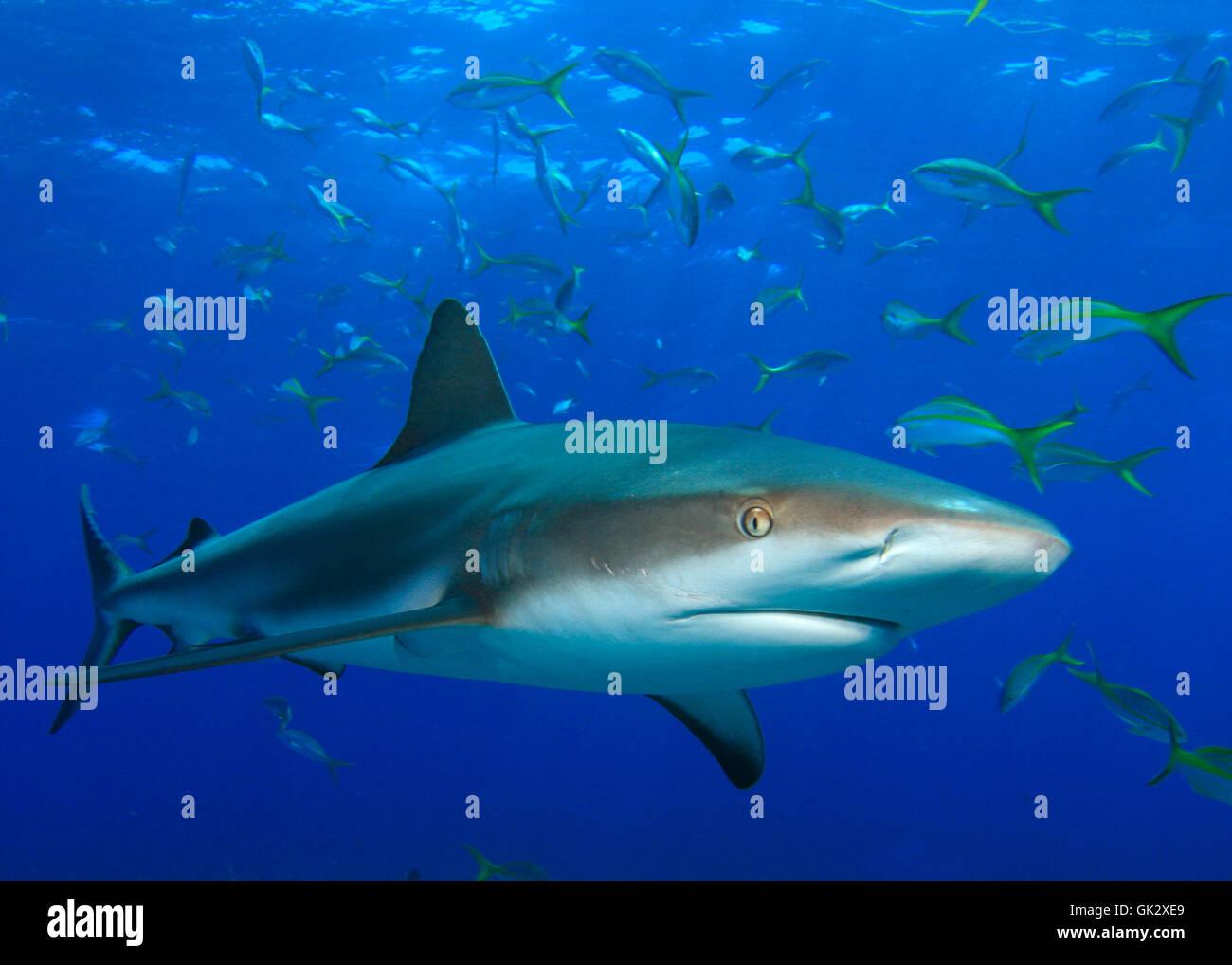 fish underwater reef Stock Photo