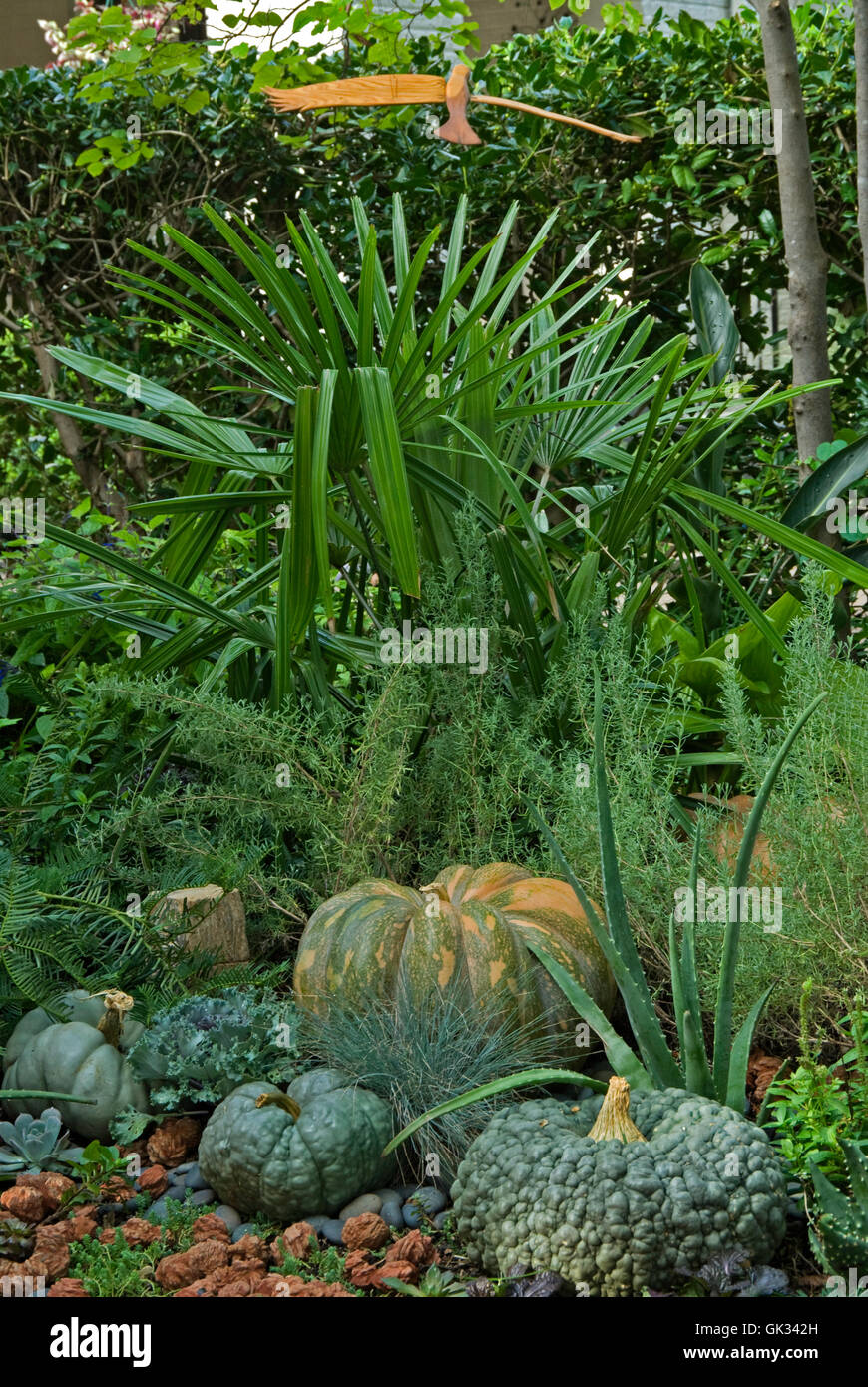 Palm in garden with pumpkins - Stock Image