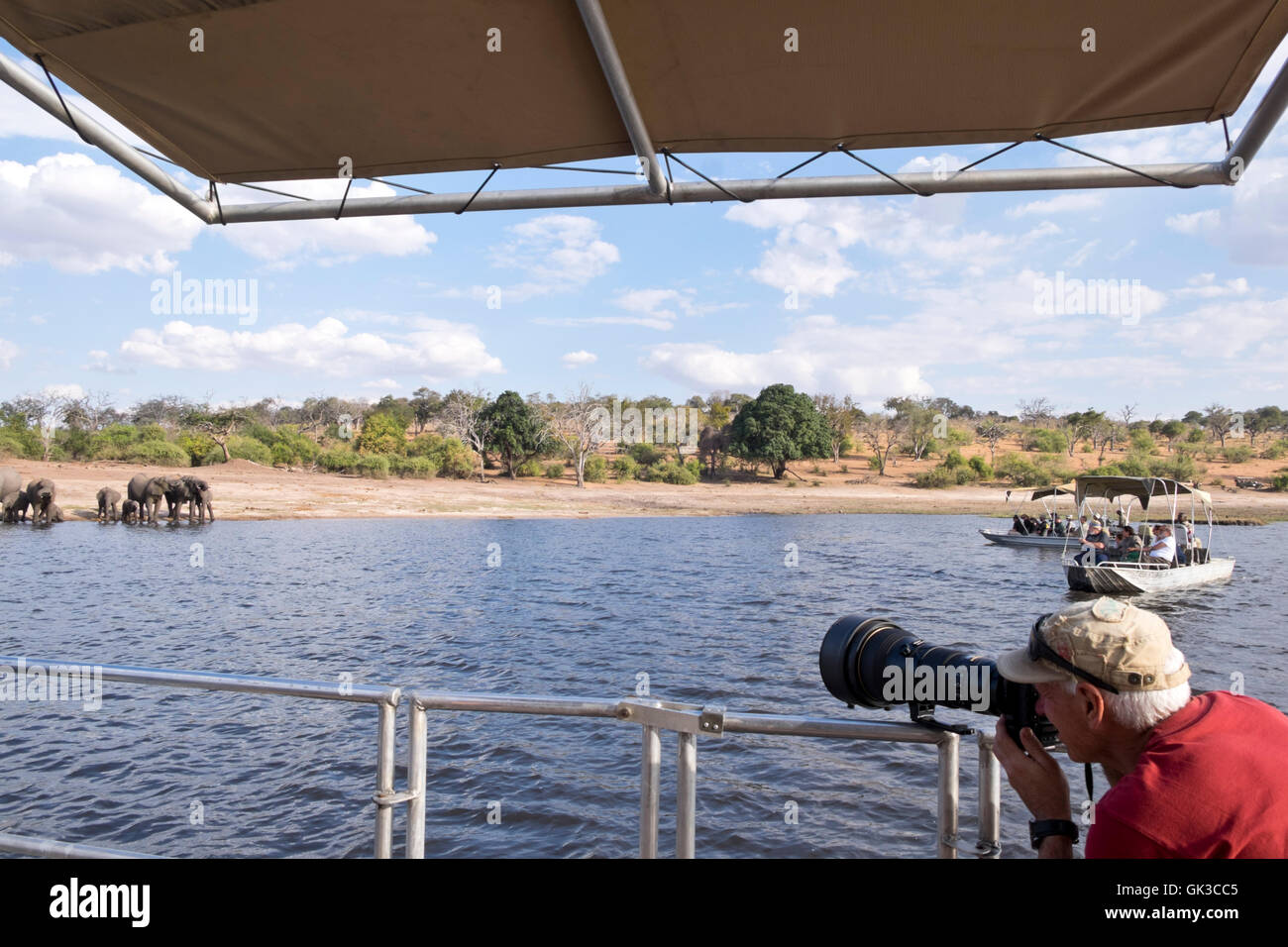 Photographer photographing a herd of African Elephants from a safari boat on the Chobe river Botswana Africa - Stock Image