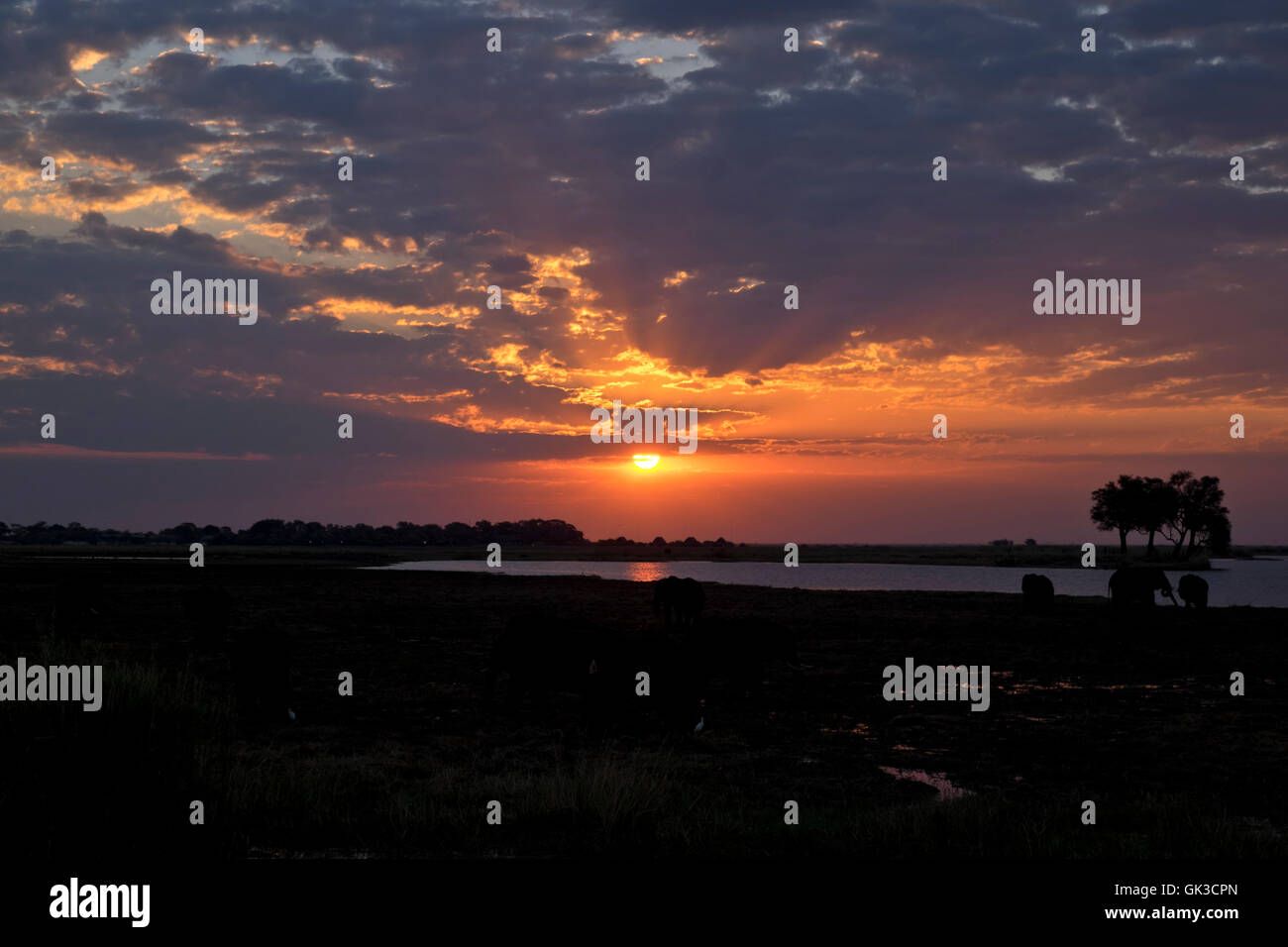 African sunset with elephant (loxodonta africana) silhouettes on the Chobe river Botswana - Stock Image