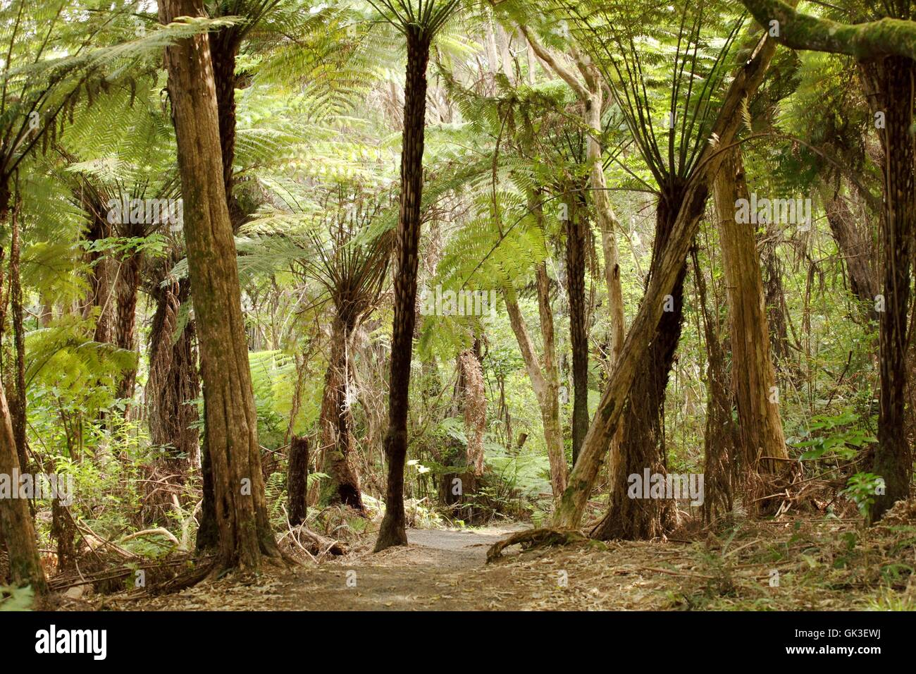 ferns in the jungles of new zealand - Stock Image