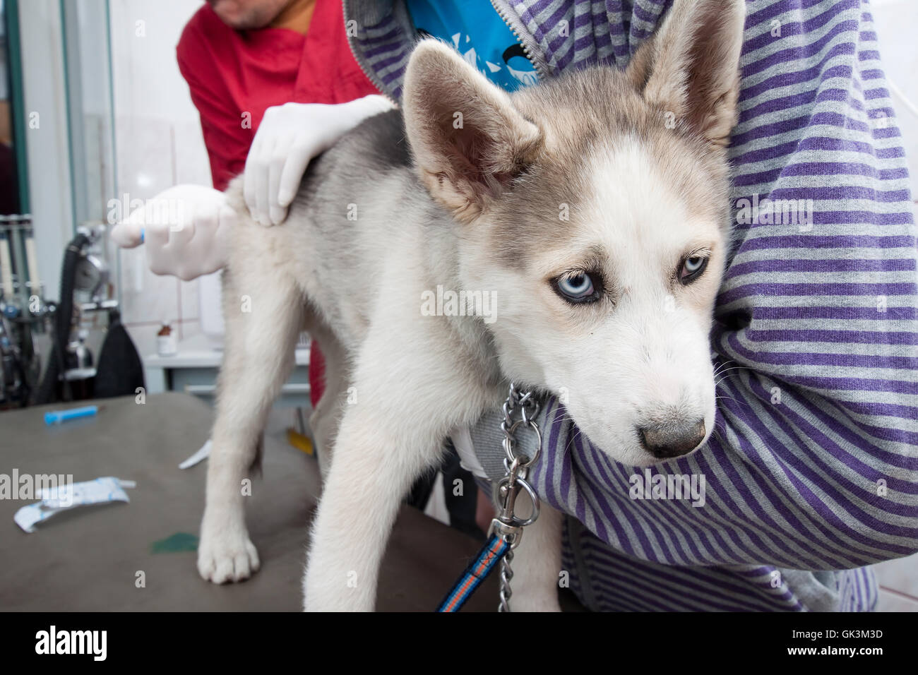 health pet dog - Stock Image