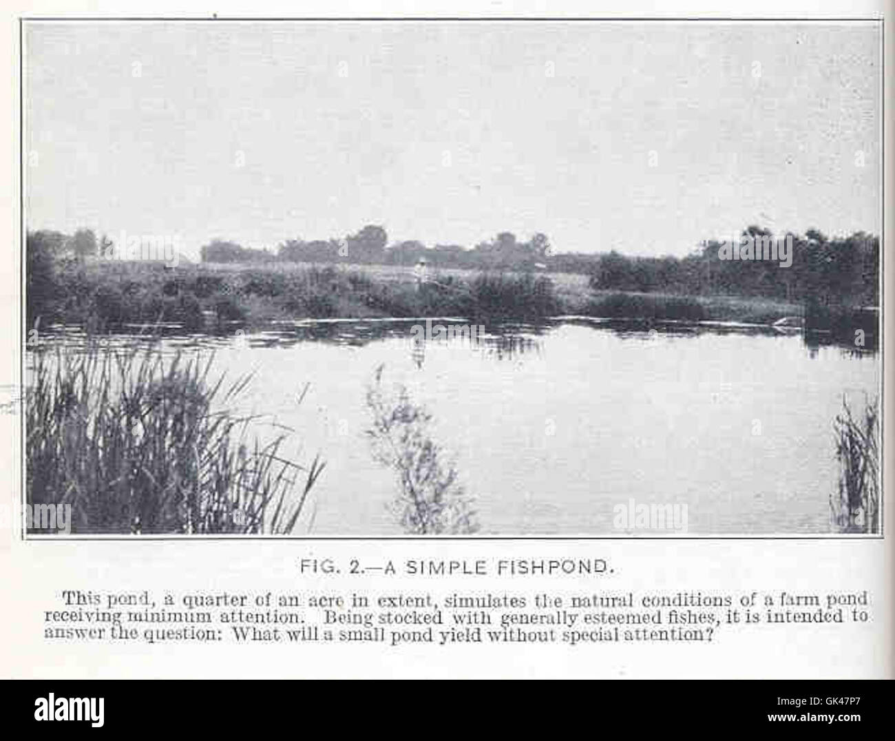 47734 Simple Fishpond