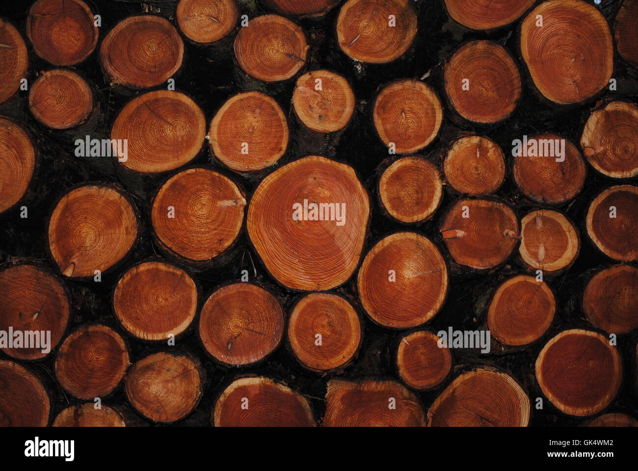 timber - Stock Image