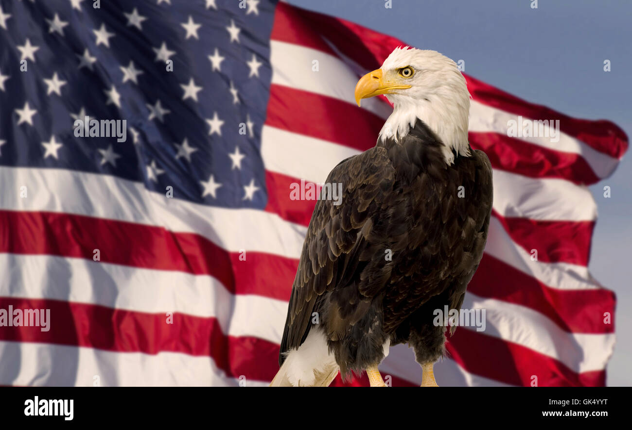 US Flag and Blue Sky with bald eagle - Stock Image