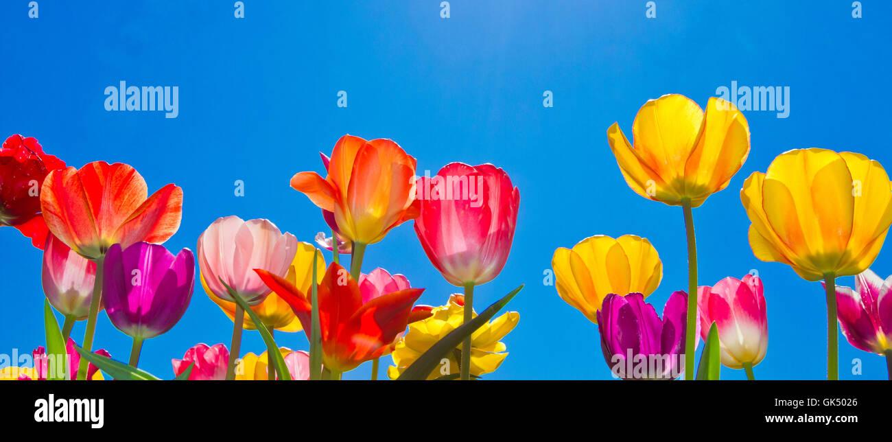 Beautyfull Flower Stock Photos Beautyfull Flower Stock Images Alamy