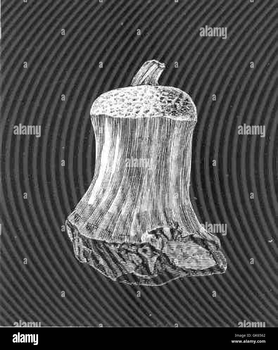 49291 Theophora scmisuberites, Oscar Schmide