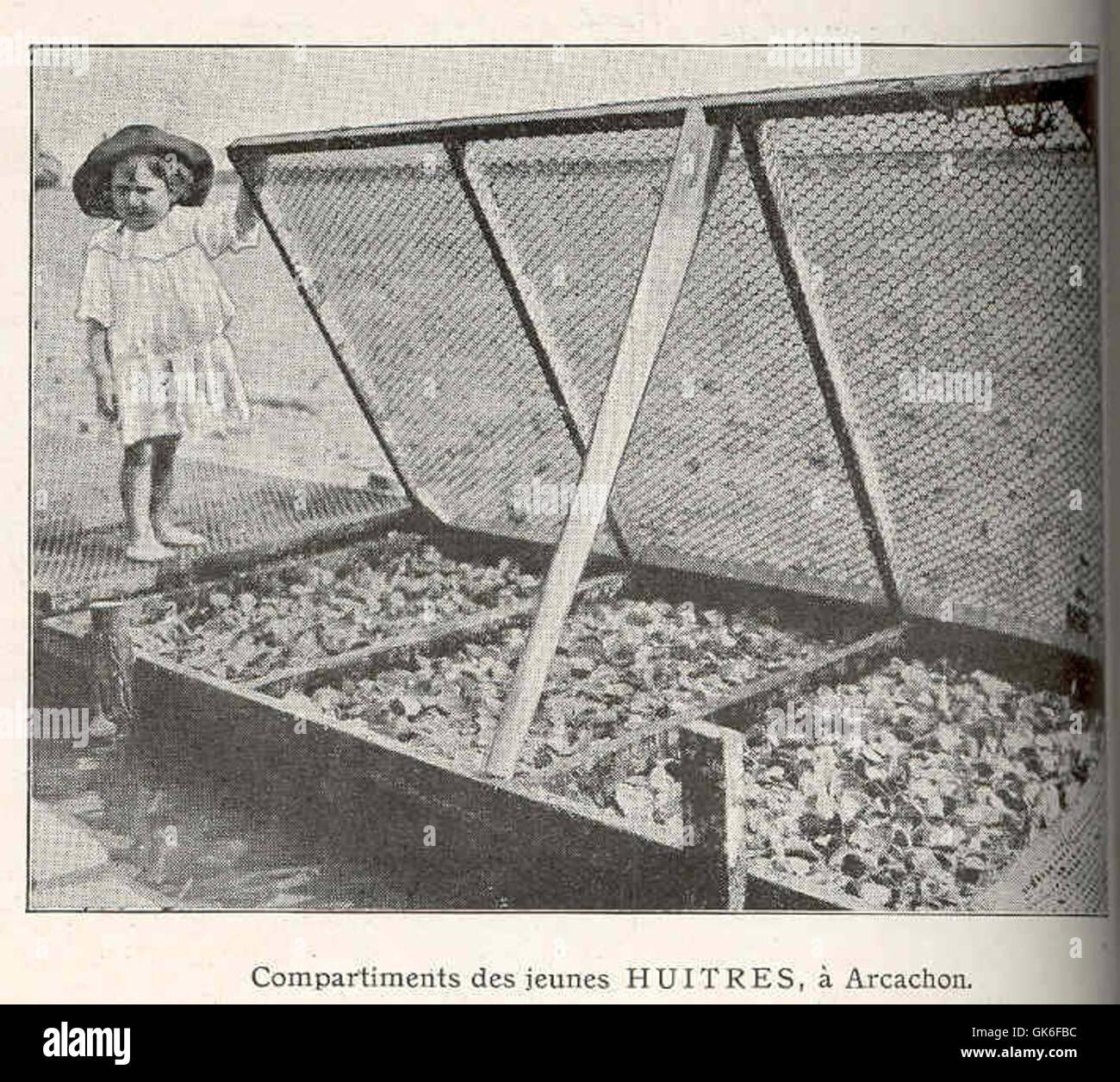 36807 Compartiments des Jeunes Huitres, a Arcachon - Stock Image
