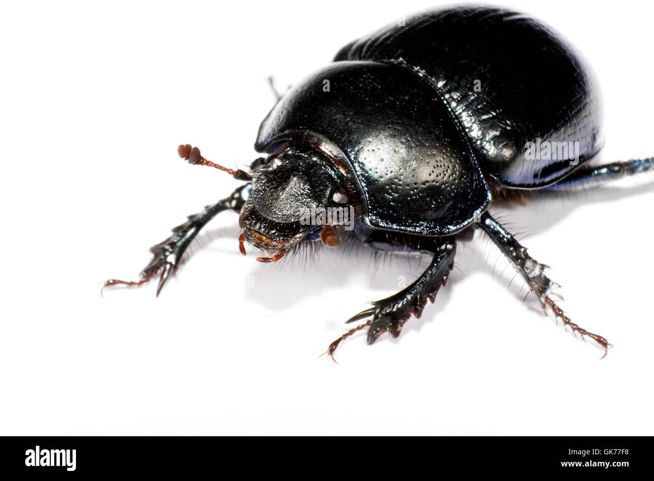 black bug in upper left corner - Stock Image