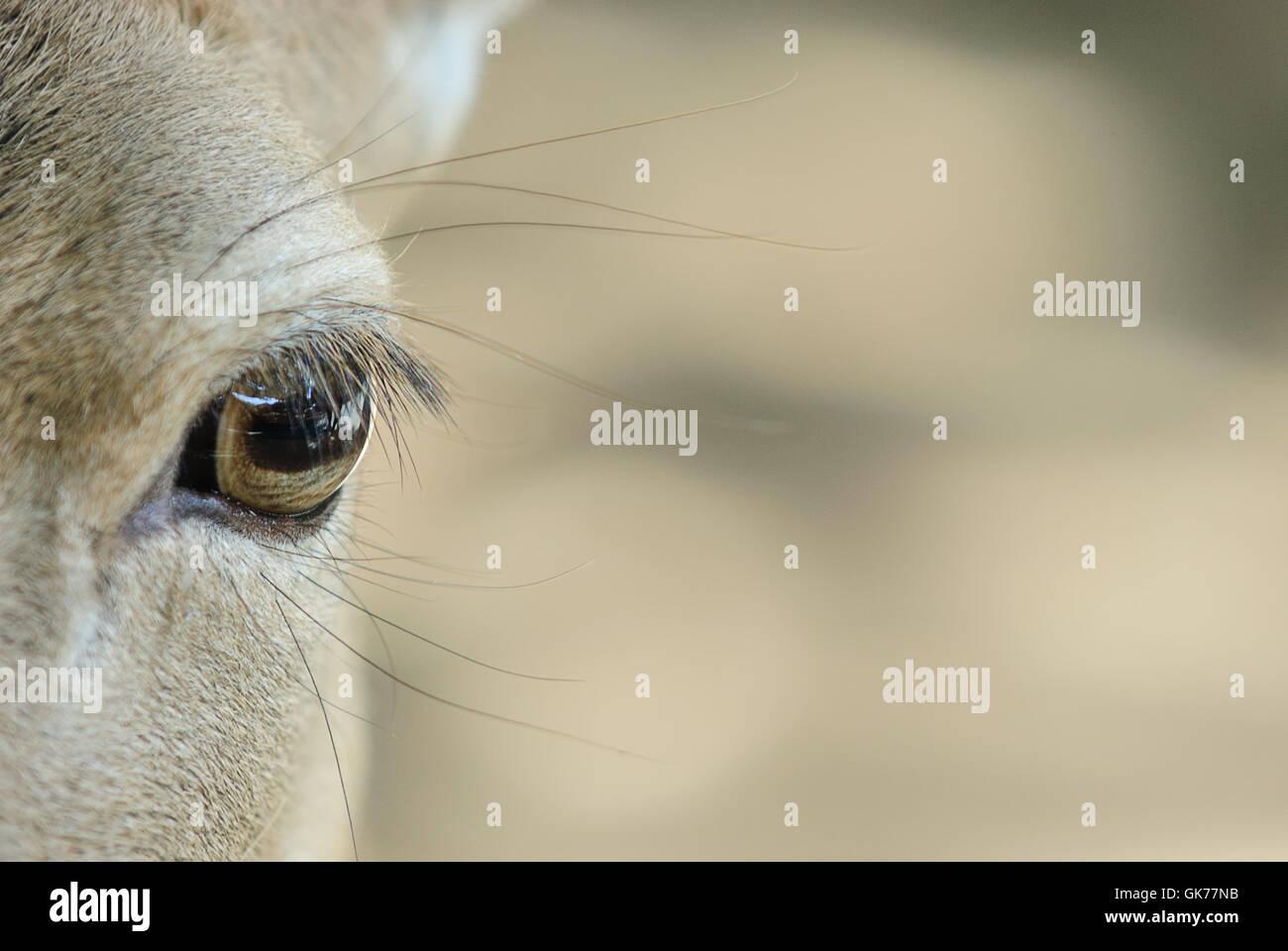 detail mammal mammals - Stock Image