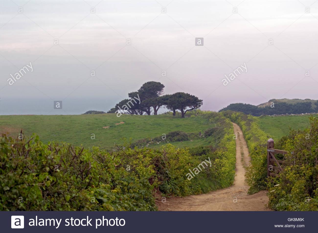 pastureland on herm - Stock Image