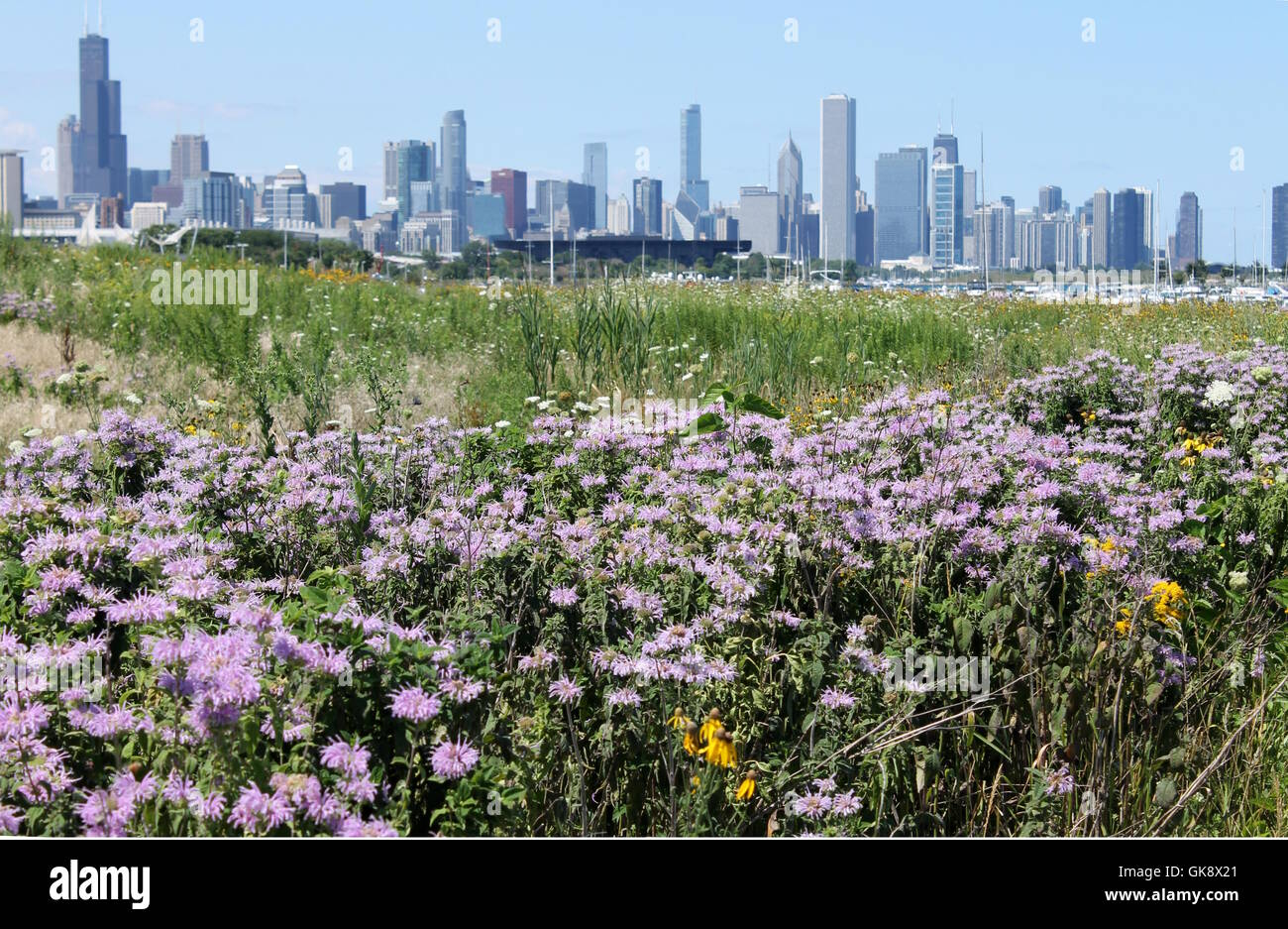 The Chicago skyline from a prairie preserve on the south side of Chicago - Stock Image