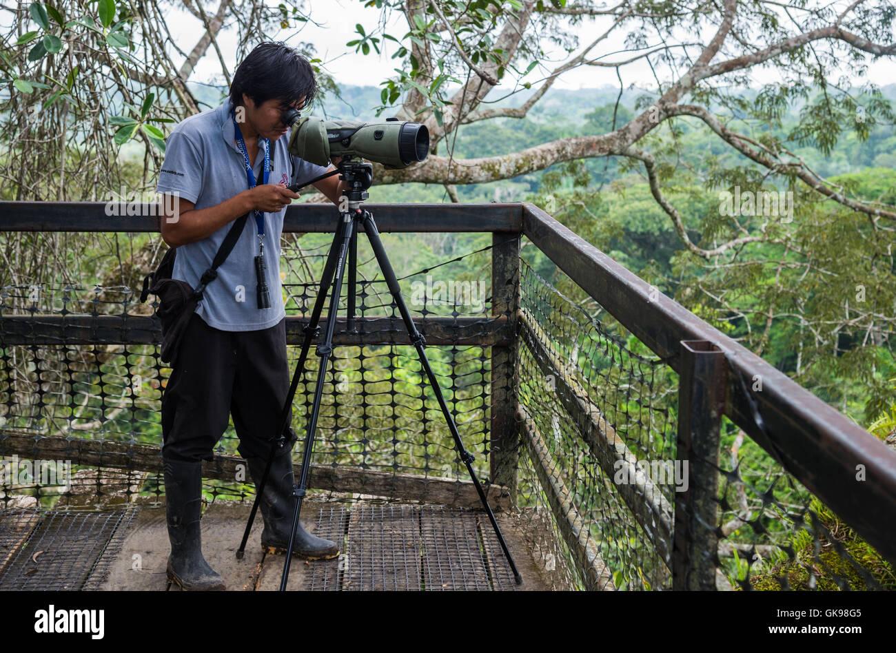 A native Kichwa naturalist guide operating a spotting scope on a canopy platform. Yasuni National Park, Ecuador, - Stock Image