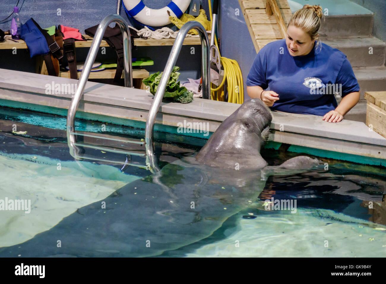 Florida Gulf Coast Bradenton South Florida Museum Parker Manatee Aquarium natural history marine environment exhibition - Stock Image