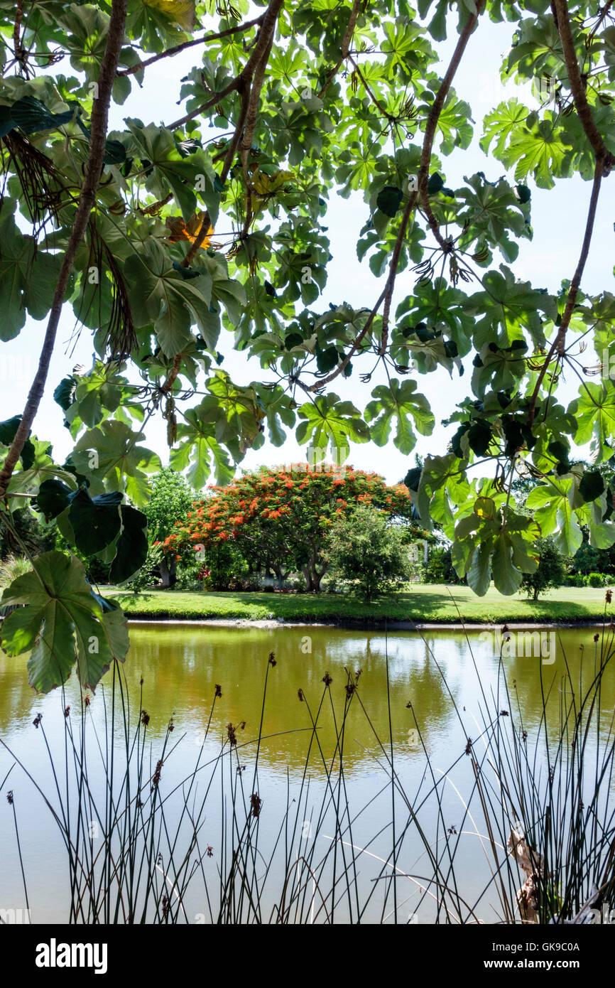 Bradenton Florida Palma Sola Botanical Park garden passive public park protected microclimate cultivation plant - Stock Image