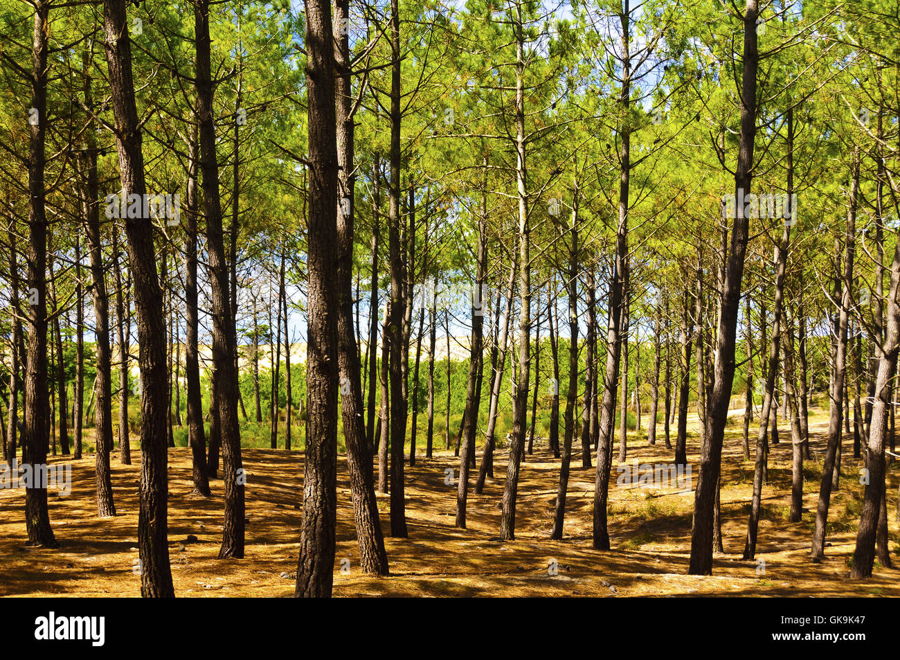 tree trees ground - Stock Image