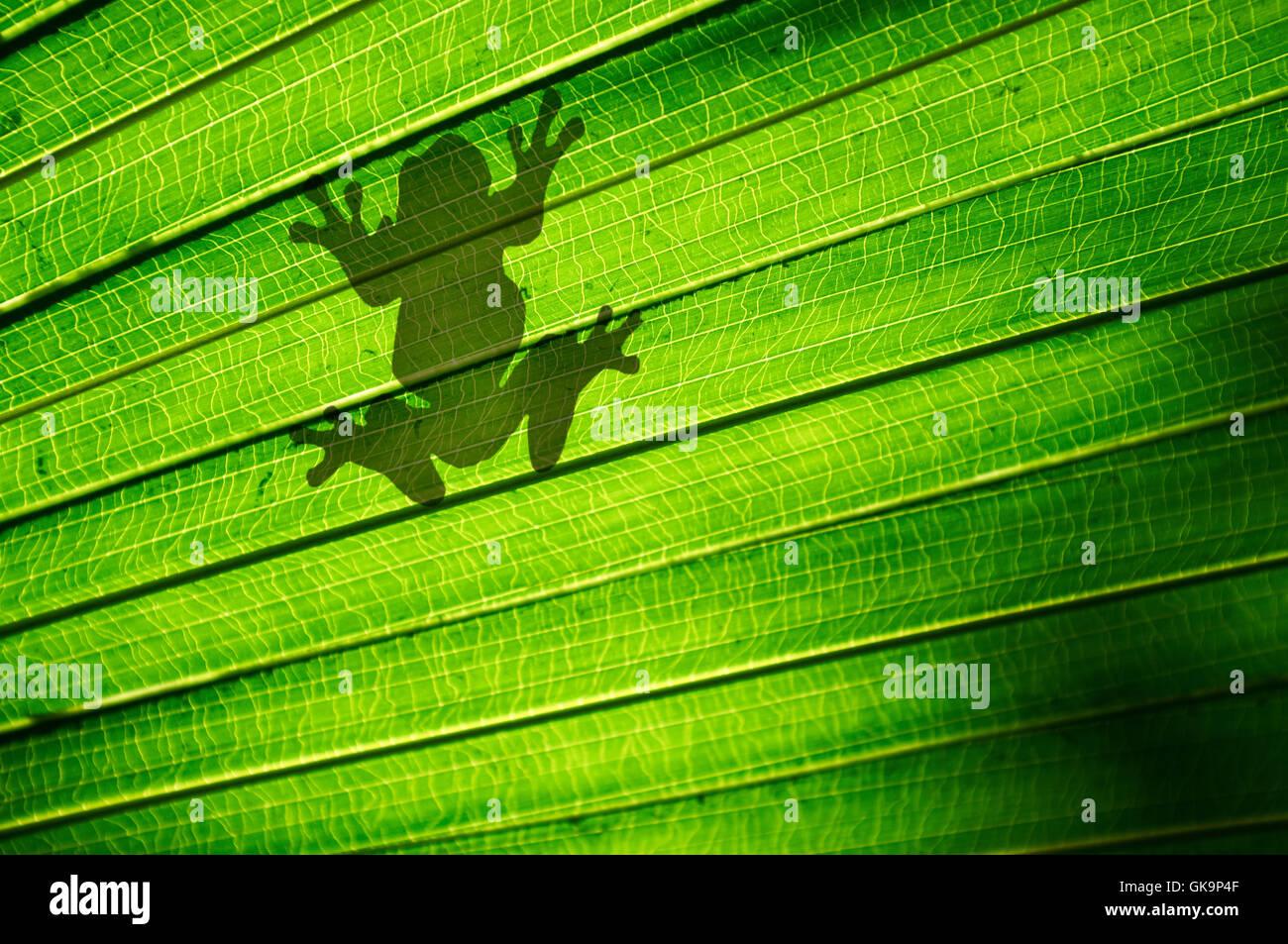 amphibian frog outline - Stock Image